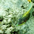 Il serait insultant de séjourner en Polynésie sans mettre la tête sous l'eau. Il suffit de s'armer d'un masque (étanche c'est mieux…) et d'un tuba de se mettre au […]